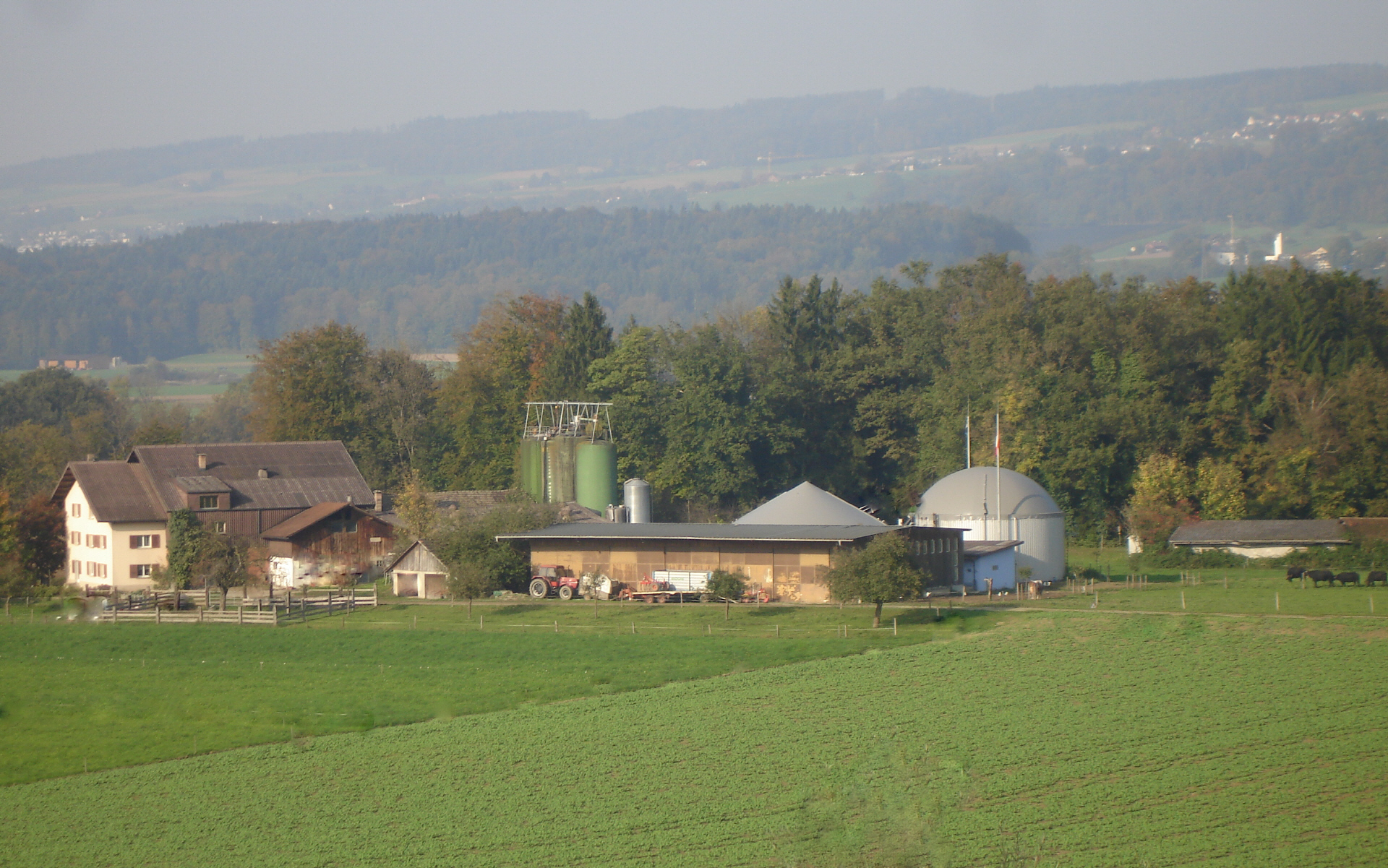Gastroabfallrecycling Wasserbüffel Biogasanlage Pferdepension